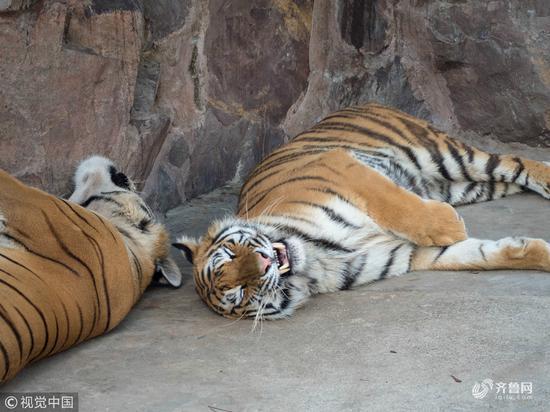 我喜欢张嘴睡觉,啊呜~
