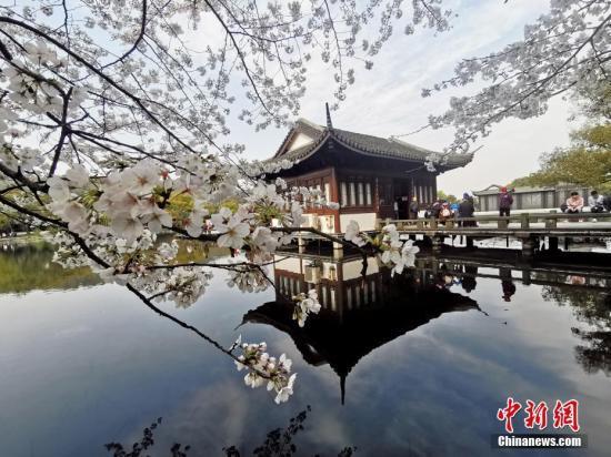 资料图:西湖边绽放的樱花。 中新社记者 张茵 摄