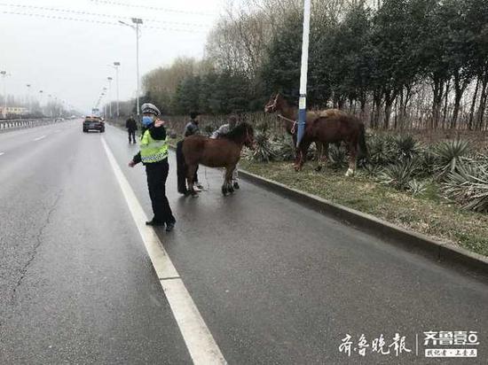 """俩男子牵5匹马上机动车道 菏泽交警化身""""赶马倌"""""""