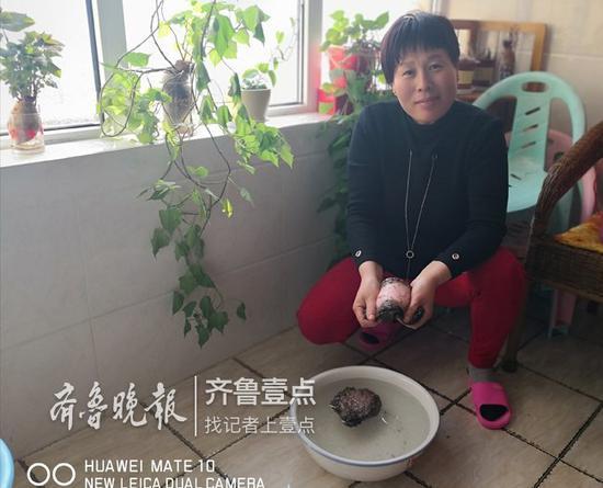 杨女士在展示她捡到的太岁