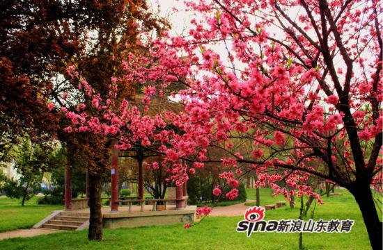 曲阜师范大学:路过曲园的春天