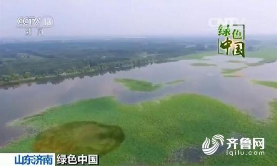 绿色中国:退渔还湿济南白云湖昔日胜景再现