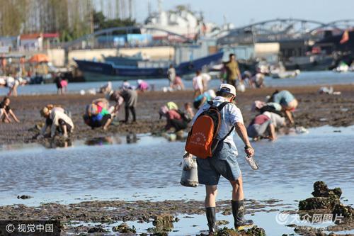 2017年9月12日,青岛,人们在栈桥海滩赶海拾趣。金秋退大潮时节,许多市民和游客来到青岛栈桥海滩赶海拾趣。