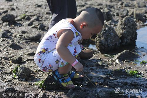 随着环境日趋向好,青岛海滨海产丰富,栈桥海滩盛产大量蛤蜊等海鲜,每天吸引大批人前来挖蛤蜊休闲。