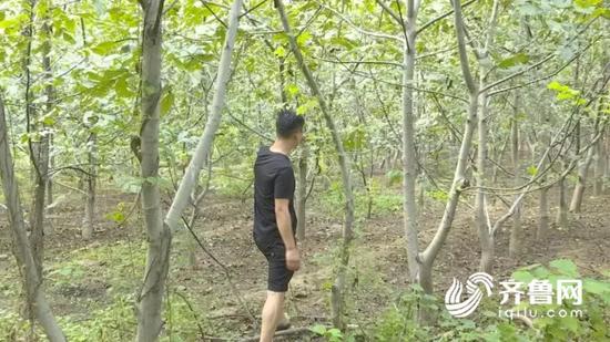 小李在核桃园还发现了一个竹竿,用竹竿打核桃,不容易掰断枝子,一看对方就是个行家里手。