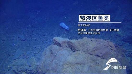 (热液区鱼类:海下2500米。)