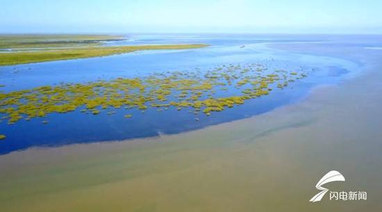这五年,当地加大了湿地生态系统的恢复,通过引注黄河水,不断增加淡水湿地面积,已完成35万亩湿地的恢复。