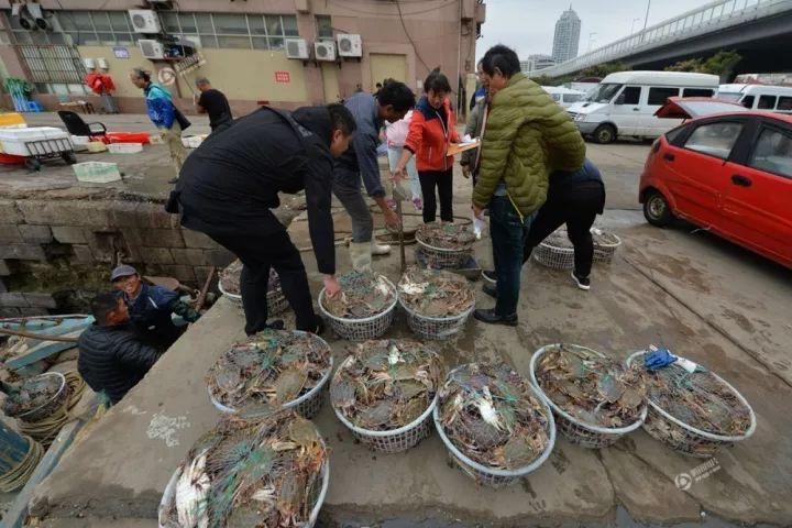 在青岛市渔港码头,渔民从船上卸下海捕梭子蟹运到海鲜市场销售。