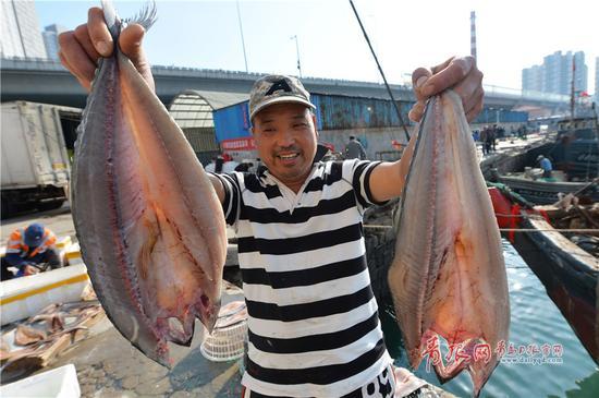 2017年11月12日,鲜活肥美的带子(鲜贝)在青岛市小港码头上岸准备装运广州。
