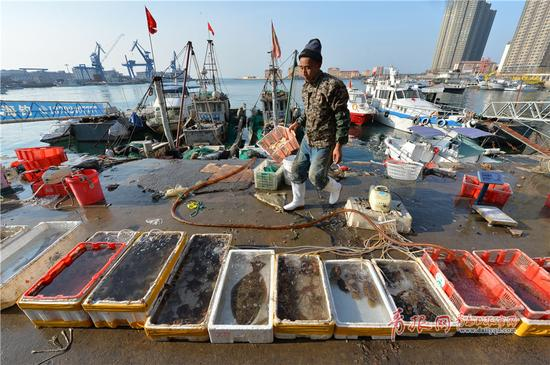 2017年11月12日,青岛市小港码头,一名渔民从船上卸下各种小海鲜准备出售。