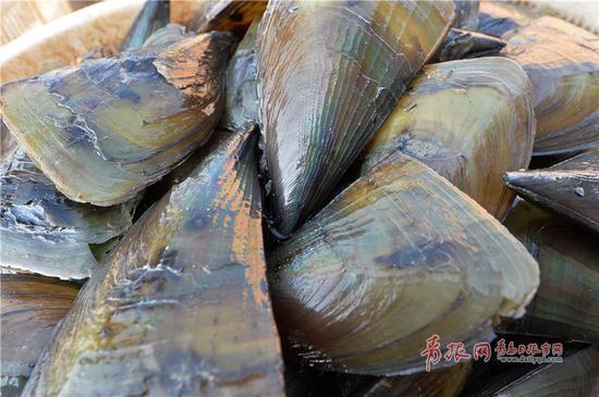 2017年11月12日,渔民在青岛市小港码头卸下刚刚运回的带子。