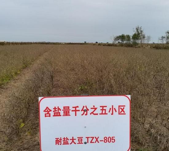 把论文写在大地上 东营黄河口培育出耐盐碱高产大豆