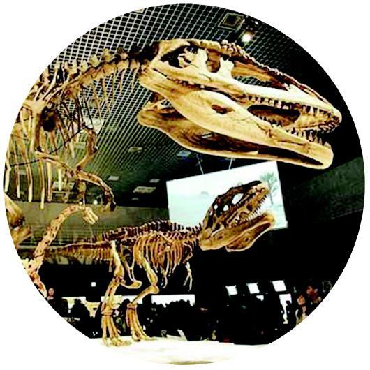 诸城恐龙博物馆吸引众多游客。