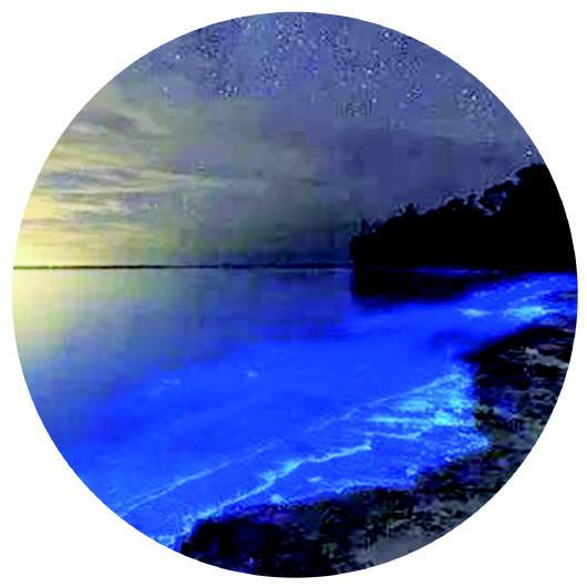 东营垦利蓝色荧光海,宛如璀璨银河。