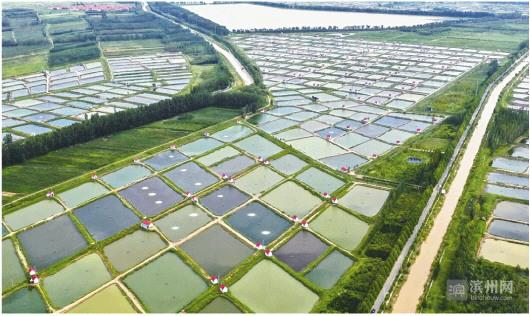 博兴县养殖白对虾面积达3.2万亩
