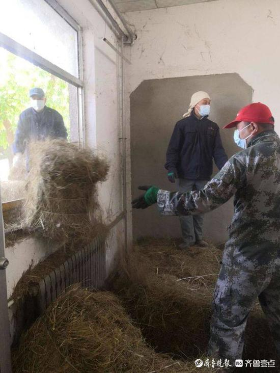 烟台南山公园动物园购入32吨干草 为动物过冬屯粮