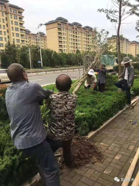 住建部门组织人员清理垃圾与倒伏树木