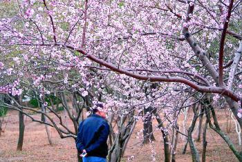 天气和暖,千佛山桃花盛开,吸引了众多游客。