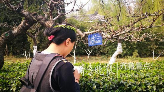 百花公园内,一位女性游客面对着碧桃树牌,不时做着笔记。记者 张淑芬摄