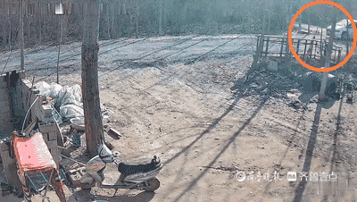 村民养的大白鹅不翼而飞 泰安民警细心寻找终破案