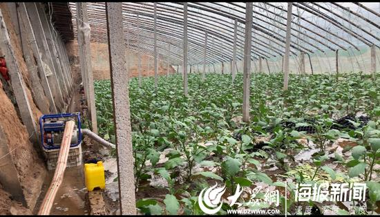 12日下午,寿光市纪台镇镇武庙村一大棚正在排水