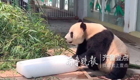 (齐鲁晚报·齐鲁壹点记者 王媛/摄)
