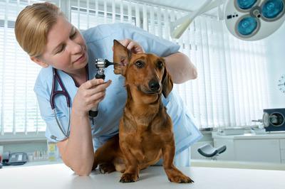 宠物医生,网络图。