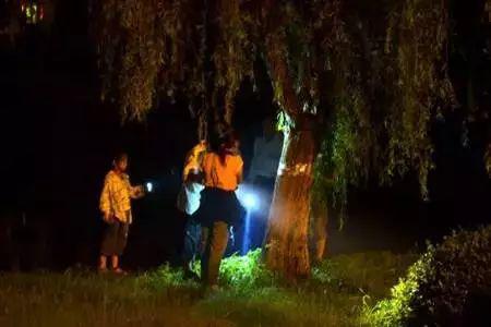 山东农村又到了晚上树林里