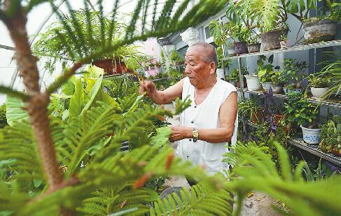 9日,80岁的陈衍良在七东社区居委会楼顶的花园照料盆栽。 记者刘玉乐 摄