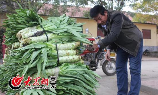 打包的莴苣