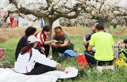 游客们在盛开的梨树下休憩交流