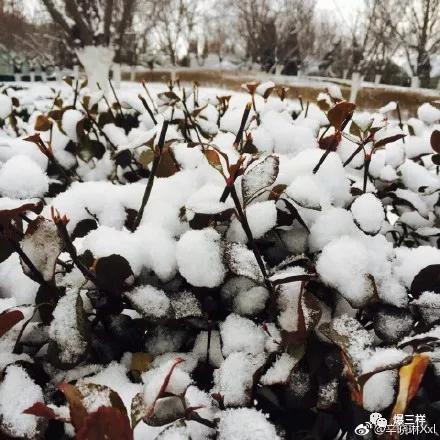 因为下雪,山东部分高速路口封闭或临时关闭。截至2月3日6时53分: