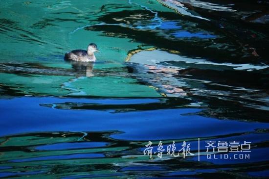 11日,济南市区温度降至零下10℃。
