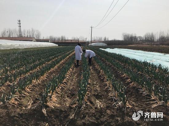 从土壤到餐桌全程质量管控 蔬菜品质好价格高1000多元