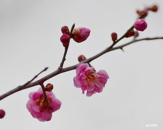 不负春日好时光,花季青岛渐入佳境