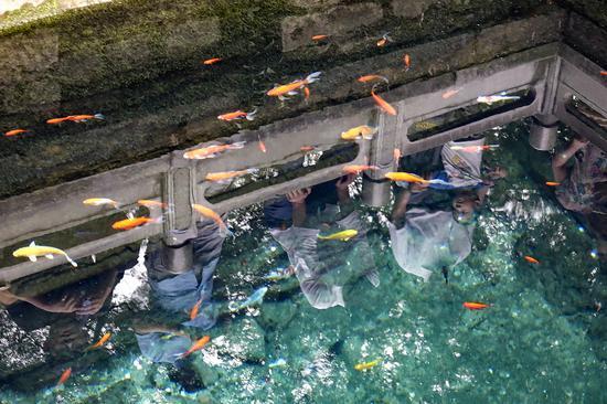 建君旅行:水中贵族