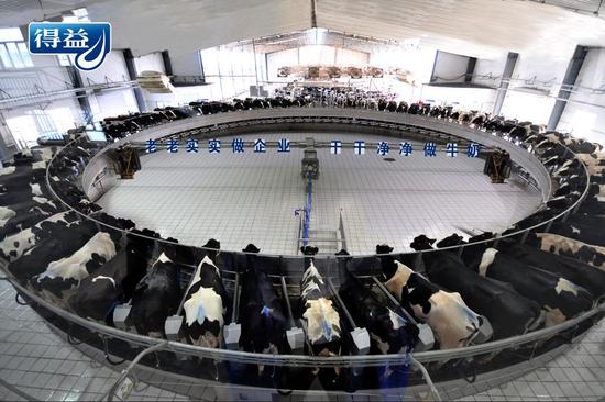 图为:得益乳业第二牧场引进的高效率、数字化瑞典利拉伐80位转盘重型挤奶机