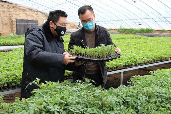 张延兵到信贷支持的蔬菜育苗大棚了解生产情况。孙晨光摄
