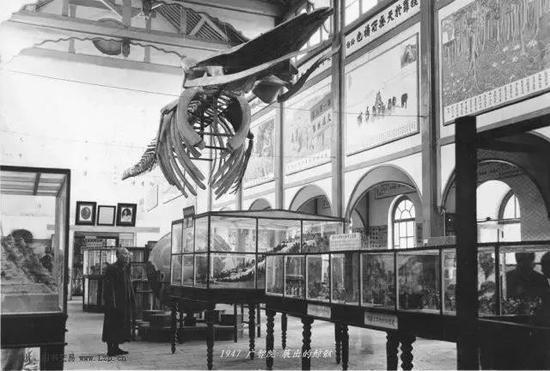 1947年广智院展出的鲸骸(图片来源于网络)
