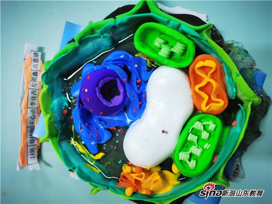 """这样的细胞你见过吗?济南中学举办""""指尖上的科学""""细胞模型制作大赛"""