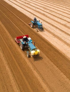 烟台:有机旱稻播种 千亩撂荒地现生机