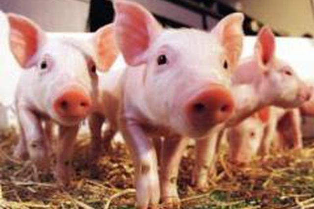 山东生猪价格连续八周持续走低 5月预计反弹
