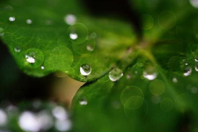 山东省气象台发布内陆大风蓝色预警 鲁西南将迎春雨