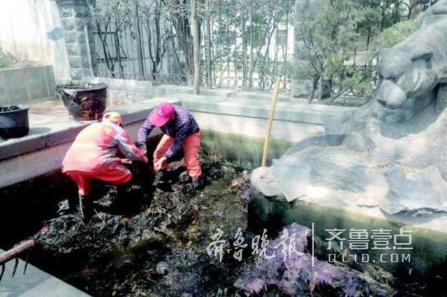 济南饮虎池是死水 或因落叶发酵变红 目前水已变清