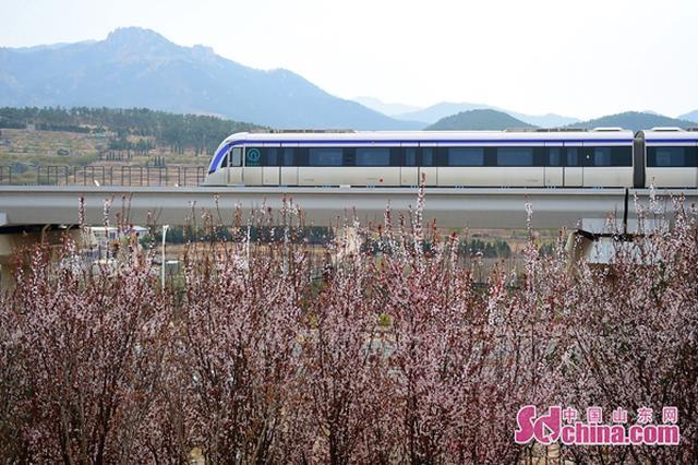 地铁11号线今日正式开通 青岛步入三线换乘时代