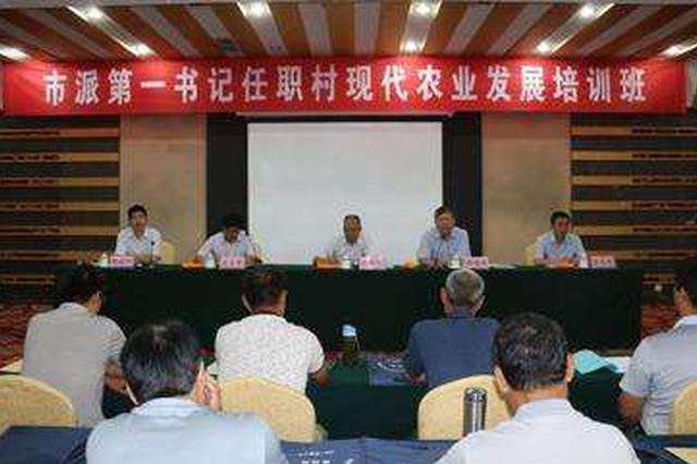 山东省派第一书记:四类产业让村民致富 四种模式助集体增收