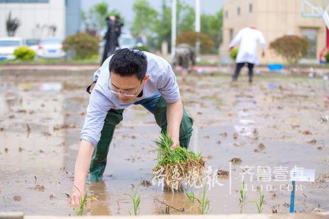 """500份海水稻在青""""同田竞技"""" 成熟后进行选育推广"""