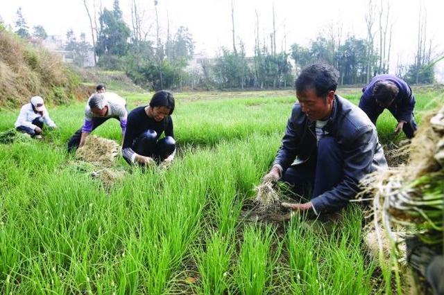 农民逾三成收入靠特色经济 济南将振兴十大农业产业
