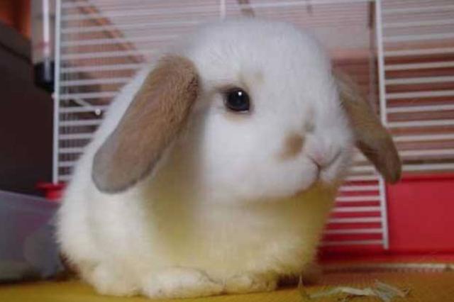 中年男济南商场偷垂耳兔 商场:想报警但不够立案标准
