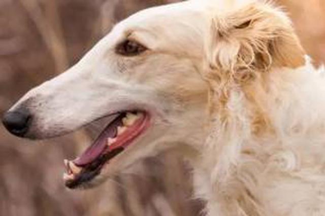 济南养犬管理:一键能寻犬 遗弃要罚款
